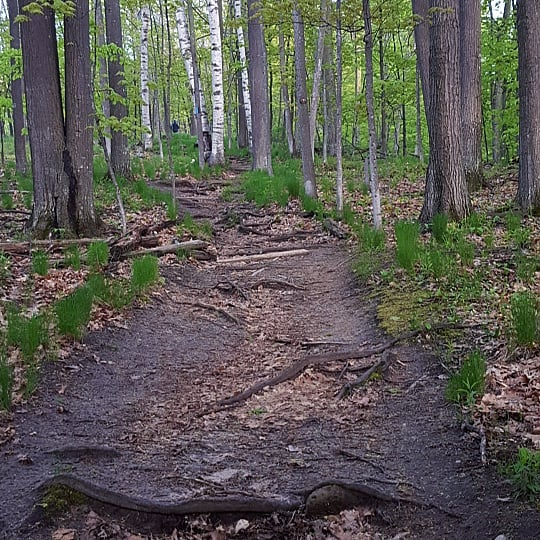 A green tree-lined hiking trail on Whaleback natural area in leland michigan.